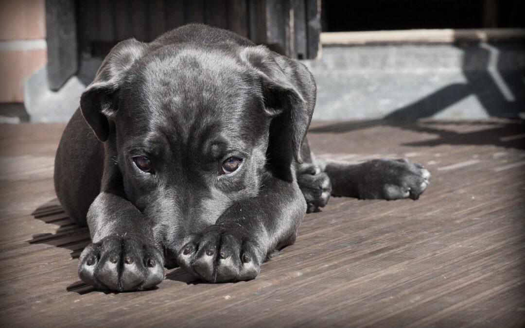 De mond van je hond onderhouden doe je zo!
